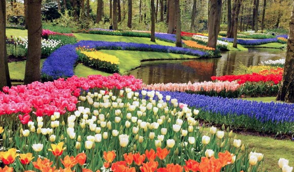 Visit the colourful Keukenhof Gardens in Holland